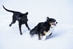 Jess and Jasra playing in the snow